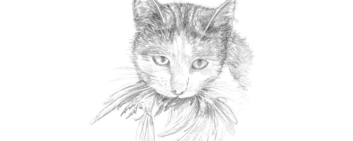 Cat illustration_ENW Resource